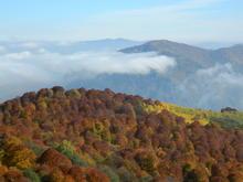 Осень в горах Адыгеи - багреющий лес