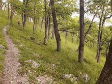 Уникальная роща скалистого дуба в пределах Скалистого хребта, фото авг. 2019г.