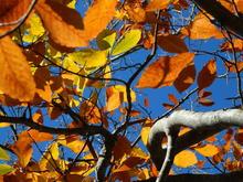 Осень на хребте Уна-Коз, фото 06.11.18г.