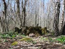 Дольмен на Цербелевых полянах, Западный Кавказ