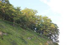 Роща скального дуба на Западном Кавказе