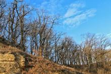 Роща скального дуба на Западном Кавказе, фото декабрь 2018г.