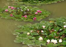 Территория турбазы Серебряный ключ, кувшинки в зарыбленном пруду