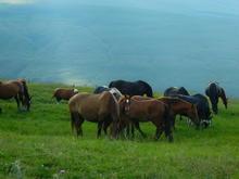 Лошади на горном пастбище, плато Лаго-Наки