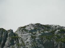 Косули на отрогах г. Оштен, вид с гузерипльского перевала, фото авг. 2016 г.